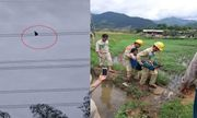 Toát mồ hôi giải cứu nam thanh niên vắt vẻo trên đường điện cao gần 100m