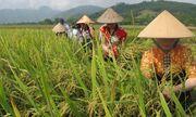 Chi cục Phát triển nông thôn tỉnh Yên Bái: Sơ kết công tác 6 tháng đầu năm 2019