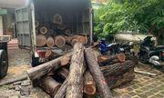 Bí mật đằng sau vụ hàng chục xe ô tô ùn ùn chở gỗ lậu