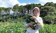 Lý Nhã Kỳ mua 50 hecta đất đồi Đà Lạt để trồng rau, nuôi gà, trải nghiệm cuộc sống mới