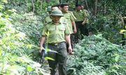 Bắc Giang: Truy đuổi lâm tặc, cán bộ kiểm lâm bị chém trọng thương