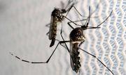Đông Nam Á: Mối lo 80% kí sinh trùng sốt rét kháng thuốc