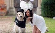 220 lần hẹn hò thất bại, siêu mẫu xinh đẹp quyết cưới cún cưng làm