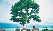 Khui ngay 3 địa điểm du lịch đẹp tựa thiên đường ở Tuyên Quang, không đi phí cả đời