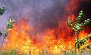 Lửa dữ bùng cháy suốt 6 giờ, người dân đau xót nhìn 20ha rừng trồng bị thiêu rụi