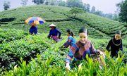 Tăng cường năng lực lao động nông thôn phục vụ khởi nghiệp nông nghiệp công nghệ cao, tham gia chuỗi giá trị nông sản toàn cầu (Phần III)