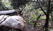 Gia Lai: Đi phát cỏ trúng dây điện trong vườn nhà, cụ ông 81 tuổi bị điện giật tử vong