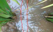 Thái Bình: Dùng dây điện trần để bẫy chuột, một người bị giật tử vong