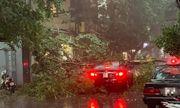 Hà Nội: Mưa lớn đầu giờ chiều khiến cây đổ, rơi trúng ô tô đang lưu thông