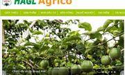 HAGL Agrico vẫn là công ty con của Tập đoàn HAGL