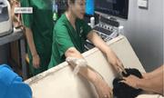 Niềm vui của 'bà mẹ Poodle' qua câu chuyện của nữ bác sỹ thú y