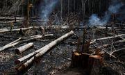 Thổ dân tại Amazon chống chọi từng phút để bảo vệ