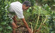 """Truy tìm """"con vật lạ"""" cắn phá vườn dừa khiến nông dân khóc ròng"""