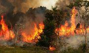 Cháy rừng Amazon lan rộng, Brazil phải điều quân đội cứu giúp