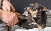 Đắk Nông: 3 trẻ nhỏ bị chó dại tấn công trong lúc vui chơi