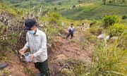 Gia Lai: Trẻ em cũng đổ xô đi bắt sâu độc giá 1,7 triệu đồng/kg