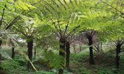 Video: Dãy núi ở Trung Quốc vẫn bảo tồn cây từ thời khủng long