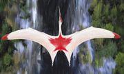 Video: Cận cảnh sải cánh khổng lồ dài gần 10 mét của thằn lằn bay