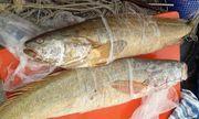 Nhiều người trả giá 70 triệu cặp cá sủ vàng