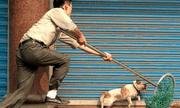 Thanh Hóa: Chỉ trong 1 đêm, hơn 40 con chó bị