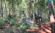 Bà Rịa - Vũng Tàu: Nghi vấn thiếu nữ 16 tuổi bị sát hại trong rừng cao su