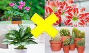 Những loại cây đẹp mấy cũng không trồng trong nhà tránh tiêu tán tài lộc, rước bệnh cho gia đình