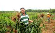 Nhổ hàng nghìn cây keo của dân, chính quyền xã nói do sai sót nhầm tên
