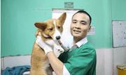 Săn tìm bác sỹ thú y hà Nội giỏi cho thú cưng có thực sự khó?