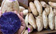 Chị em sốt sình sịch mua khoai lang tím Úc giá đắt về ăn ngừa ung thư