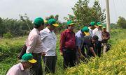 Bình Điền đẩy lên một bước chương trình canh tác lúa thông minh