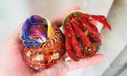 Người Việt đổ xô đi mua con ốc lạ có giá 3 triệu đồng
