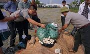 Hà Nội tiêu hủy 82kg sản phẩm từ ngà voi trong một vụ bắt giữ