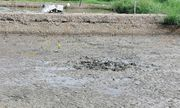 Tin tức thời sự mới nóng nhất hôm nay 3/10/2019: Tá hỏa phát hiện bộ xương người dưới lớp bùn trong đầm tôm