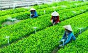 Kinh tế hợp tác, bản chất của Hợp tác xã nông nghiệp và lợi ích mang lại