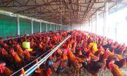 Vào gà J-DABACO đón Tết Nguyên đán 2020