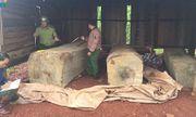 Phát hiện gần 10m3 gỗ cất giấu trái phép tại nhà rẫy ở Đắk Nông