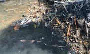Hòa Bình chỉ đạo điều tra vụ đổ trộm dầu thải gây ô nhiễm nguồn nước