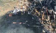 Vụ nghi đổ trộm dầu thải gây ô nhiễm nguồn nước sông Đà: Bắt khẩn cấp 2 đối tượng
