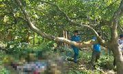 Người đàn ông tử vong bí ẩn trong vườn điều ở Đồng Nai