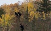 Thế giới động vật: Gấu mẹ động viên các con vượt qua nỗi sợ theo cách