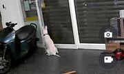 Lắp camera theo dõi thú cưng trong nhà, người đàn ông phát hiện sự thật rơi nước mắt