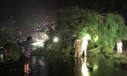 Hàng loạt cây xanh đổ ngổn ngang sau ảnh hưởng của bão số 5