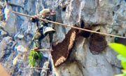 Thót tim khi treo mình trên vách núi cao hàng trăm mét lấy mật ong