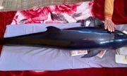 Cá ông ở đầm Thị Nại mắc lưới ngư dân