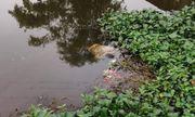 Kinh hoàng phát hiện thi thể người đàn ông trên kênh nước