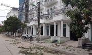 Hà Nội: Làm rõ vụ hàng cây xanh bị nhóm đối tượng chặt trộm trong đêm