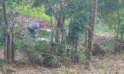 Vụ phát hiện thi thể không nguyên vẹn trong vườn điều: Chi tiết lạ khi trích xuất camera