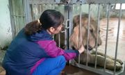 Nuôi mãnh thú giữa lòng Hà Nội: Người phụ nữ hàng ngày chải bờm, bắt rận, chơi với sư tử nặng gần 200kg