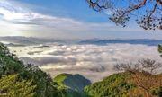 """Cận cảnh rừng nguyên sinh hàng nghìn ha """"tàng hình"""" trong biển mây"""