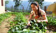 Thầy hiệu trưởng trồng rau, nuôi lợn cải thiện bữa ăn cho học trò